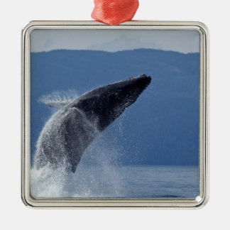 USA, Alaska, Angoon, Humpback Whale (Megaptera Silver-Colored Square Ornament