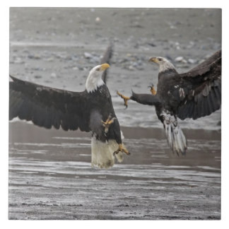 USA, Alaska, Chilkat Bald Eagle Preserve. Two Tile