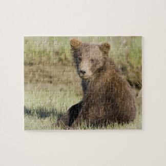 USA. Alaska. Coastal Brown Bear cub at Silver 3 Jigsaw Puzzle