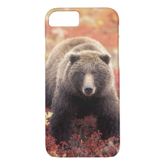 USA, Alaska, Denali NP, female Grizzly Bear iPhone 8/7 Case