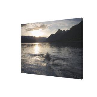 USA, Alaska, Glacier Bay National Park, Canvas Print