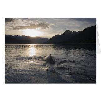 USA, Alaska, Glacier Bay National Park, Card