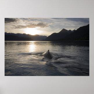 USA, Alaska, Glacier Bay National Park, Poster