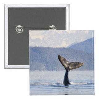 USA, Alaska, Icy Strait. Humpback Whale calf 2 Inch Square Button