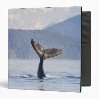 USA, Alaska, Icy Strait. Humpback Whale calf 3 Ring Binders