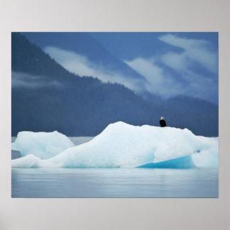 USA, Alaska, Inside Passage. Bald eagle perched Poster