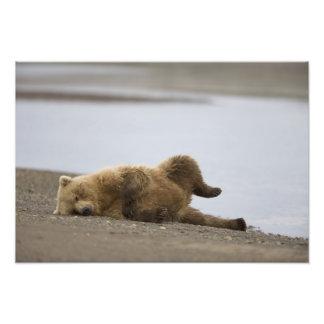 USA, Alaska, Katmai National Park, Brown Bear 2 Photo Art