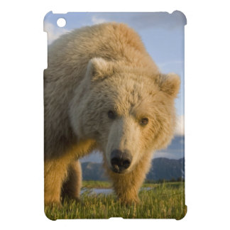 USA, Alaska, Katmai National Park, Brown Bear 3 iPad Mini Case