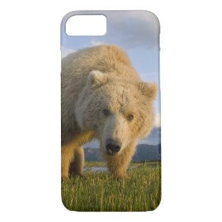 USA, Alaska, Katmai National Park, Brown Bear 3 iPhone 7 Case