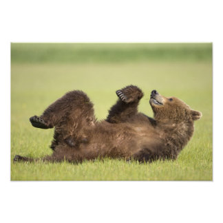 USA, Alaska, Katmai National Park, Brown Bear 6 Photo Print