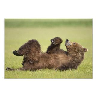 USA, Alaska, Katmai National Park, Brown Bear 6 Photo Print