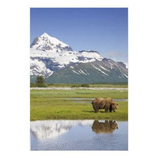 USA, Alaska, Katmai National Park, Brown Bear Art Photo