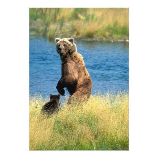 USA, Alaska, Katmai National Park, Grizzly 3 Photo Print