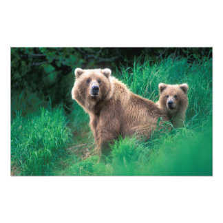 USA, Alaska, Katmai National Park, Grizzly 5 Photo Print