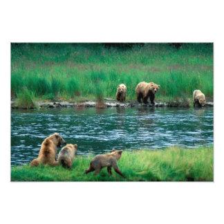 USA, Alaska, Katmai National Park, Grizzly Photograph