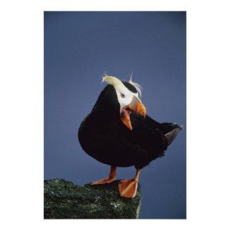 USA, Alaska, Pribilof Islands. Close-up of Photo Art