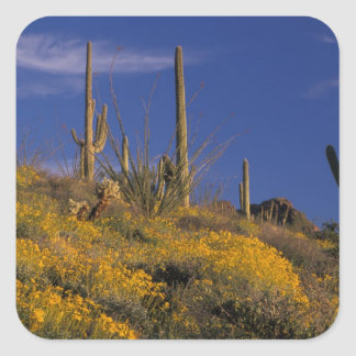 USA, Arizona, Organ Pipe Cactus National 2 Square Sticker