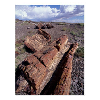 USA, Arizona, Petrified Forest National Park, 2 Postcard