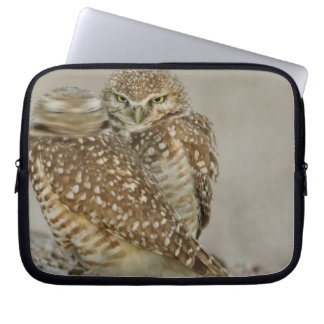 USA, Arizona, Phoenix. One of pair of burrowing Laptop Sleeves