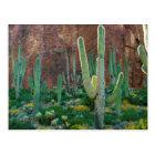 USA, Arizona. Saguaro Cactus Field By A Cliff Postcard