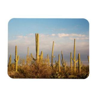 USA, Arizona, Saguaro National Park, Saguaro Rectangular Photo Magnet