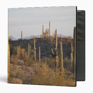 USA, Arizona, Sonoran Desert, Ajo, Ajo 2 3 Ring Binder