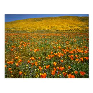 USA, California, Antelope Valley California Postcard