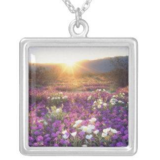 USA, California, Anza-Borrego Desert State Park. 2 Silver Plated Necklace