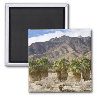 USA, California, Anza-Borrego Desert State Park. Square Magnet