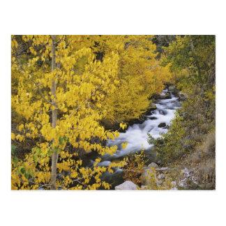 USA, California. Bishop Creek and aspen trees in Postcard