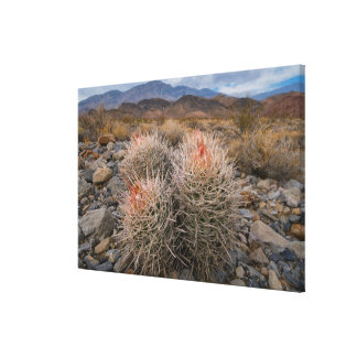 USA, California, Cactus in desert Canvas Print