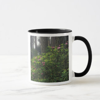 USA, California, Del Norte, Redwoods St. Park, Mug