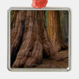 USA, California, Giant Sequoia tree Metal Ornament