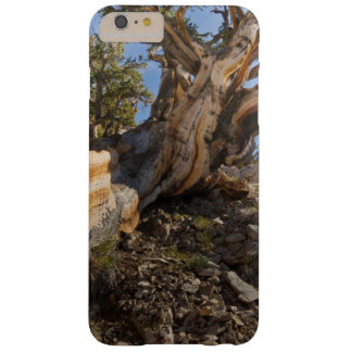 USA, California, Inyo National Forest 12 Barely There iPhone 6 Plus Case