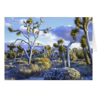 USA, California, Joshua Tree National Park. 2 Card