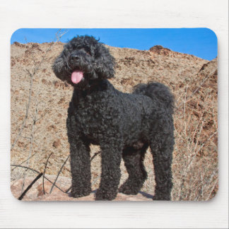 USA, California. Labradoodle Standing Mouse Pad