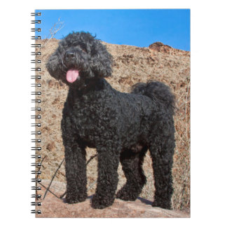 USA, California. Labradoodle Standing Notebooks
