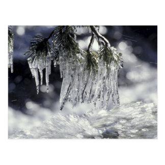 USA, California, Lake Tahoe. Icicles over Postcard