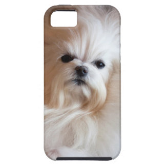 USA, California. Maltese Lying Down iPhone 5 Covers