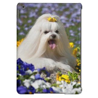 USA, California. Maltese Lying In Flowers iPad Air Cover