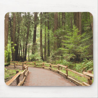 USA, California, Marin County, Muir Woods Mouse Pad