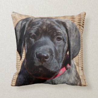 USA, California. Mastiff puppy looking at you. Throw Pillow
