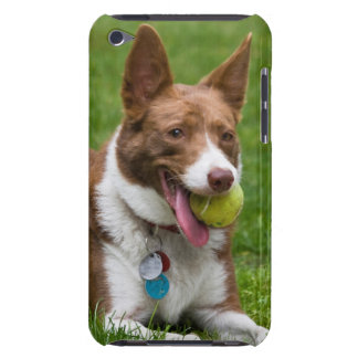 USA, California. Mcnab Shepherd Waiting iPod Touch Case