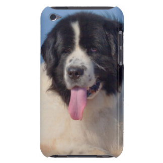USA, California. Newfoundland Lying In Sand Barely There iPod Cases