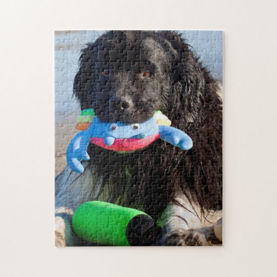 USA, California. Newfoundland With Toy In Mouth Jigsaw Puzzle