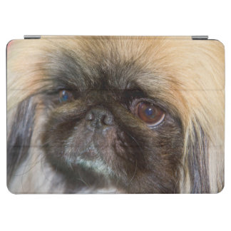 USA, California. Pekingese Close Up iPad Air Cover