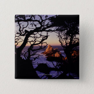USA, California, Point Lobos, cypress tree and 2 Inch Square Button