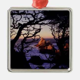 USA, California, Point Lobos, cypress tree and Silver-Colored Square Ornament