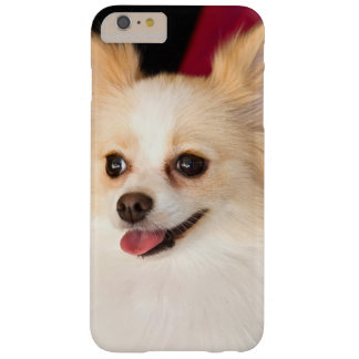 USA, California. Pomeranian Portrait With Red Barely There iPhone 6 Plus Case