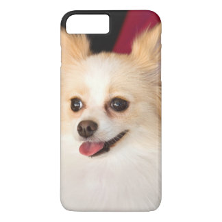 USA, California. Pomeranian Portrait With Red iPhone 7 Plus Case